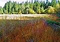 Biotopo Tschingger (BZ) m 1320 e diffusione di Phragmites australis... - panoramio.jpg