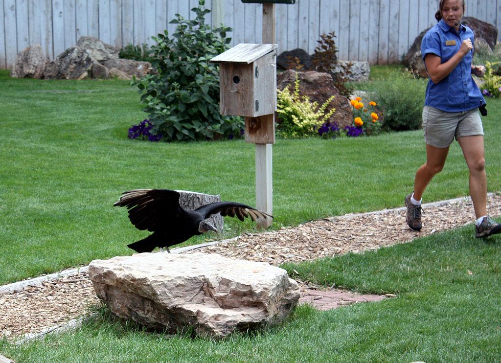 File:Bird show at Reptile Gardens, South Dakota.jpg - Wikimedia Commons