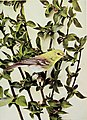 Birds and nature (1897) (20375706972).jpg
