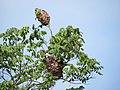 Birds on tree2.jpg
