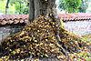 Blätter auf einem Baumstamm.jpg