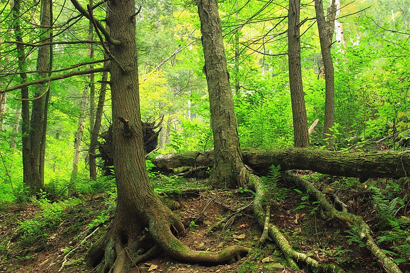 File:Black Forest Trail (Revisited) (4) (21013132039).jpg