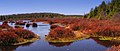 Black Moshannon State Park Wetland2 NicholasT.jpg