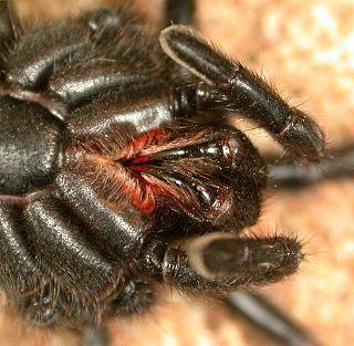 Spider bite bite caused by a spider