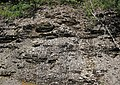 Black shale (Sunbury Shale, Lower Mississippian; Tener Mountain roadcut, southern Ohio, USA) 13 (35019552054).jpg