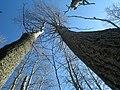 Blauer Himmel in Ilmenau - panoramio.jpg