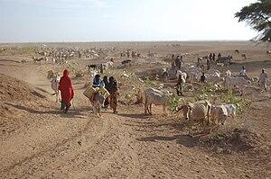 Danan, Ethiopia - Inhabitants of Danan herding cattle