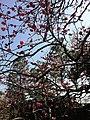 Blossoms - Kyoto Japan.jpg