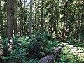 Blue Lake Trail at Okanogan National Forest.jpg