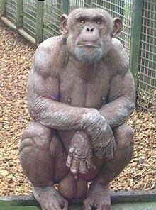 Член орангутана