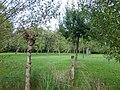 Bornem Benedenstraat Hoogstamboomgaard (4) - 230347 - onroerenderfgoed.jpg