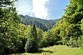Bosc de les Molleres de Gresolet.jpg
