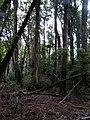 Bosque en Chanquín 03.jpg