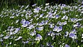 Botanic garden - Cluj-Napoca (5688271590).jpg
