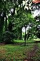 Botanic garden limbe12.jpg