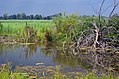 Brancheau Unit Wetland (36221419335).jpg