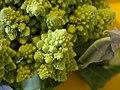 Broccoli DSCN4350.jpg