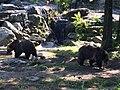 Bronx Zoo - NY - USA - panoramio (12).jpg
