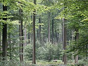 The Sonian Forest at the outskirts of Brussels