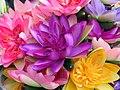 Bunte Seerosen Blüten - panoramio.jpg