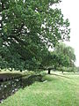 Bushy Park (3018464223).jpg