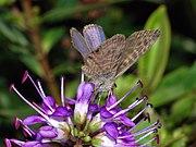 Butterfly October 2007-2.jpg
