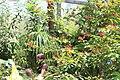 Butterfly Rainforest FMNH 43.jpg