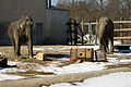 Buttonwood Park Zoo Elephants.jpg
