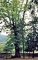 Cáceres, árboles 1975 09.jpg