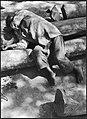 CH-NB - Iran, Mazanderan (Mazandaran)- Menschen - Annemarie Schwarzenbach - SLA-Schwarzenbach-A-5-19-087.jpg