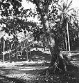 COLLECTIE TROPENMUSEUM Pasanggrahan bij Karang Hawoe aan de Wijnkoops-baai TMnr 60026633.jpg