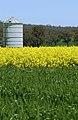 CSIRO ScienceImage 3676 Wheat and Canola Crops and Silo.jpg