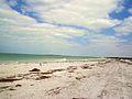Caladesi island beach 01.jpg