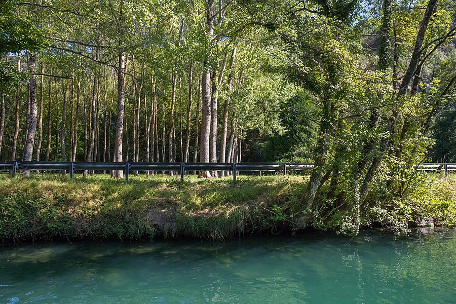 Populus plantation on Departmental road 18, near Chanaz, among the Savières Channel.