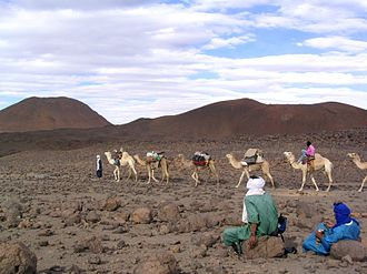 Trans-Saharan trade - Modern-day camel caravan near the Ahaggar Mountains in the central Sahara, 2006