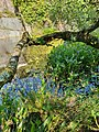 Carfury Quarry vegetation (1).jpg