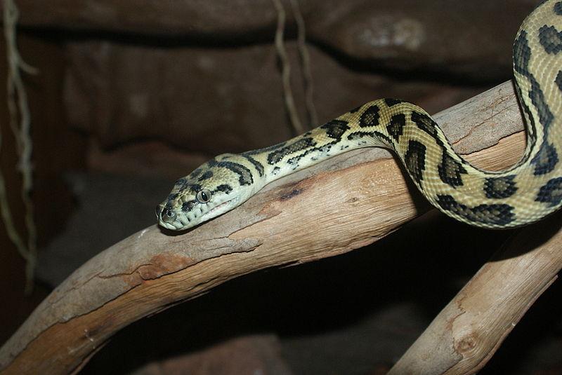 Python date in Brisbane