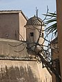 Castello - panoramio - Emanuela Meme Giudic… (4).jpg