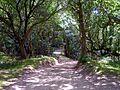 Castle Hill Lane, Burley, New Forest - geograph.org.uk - 211526.jpg