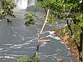 Cataratas do Iguaçu - Foz do Iguaçu 1.JPG