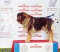 Caucasiansheepdog0b.jpg