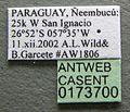 Cephalotes persimilis casent0173700 label 1.jpg