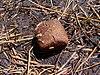 Cube-shaped wombat droppings