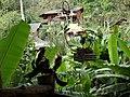 Chae Son, Mueang Pan District, Lampang, Thailand - panoramio (5).jpg