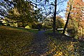 Chemin couvert de feuilles (22305448903).jpg