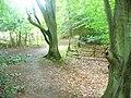Cherkley Wood - geograph.org.uk - 1395086.jpg
