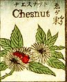 Chestnut Tsunajima Kamekichi Fashionable melange of English words, 1887.jpg