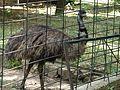 Chișinău Zoo C012 (June 2016).jpg