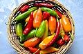 Chili-Harvest-2012.jpg