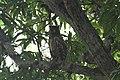 Chinnar Wildlife Sanctuary IMG 9072 (46).JPG